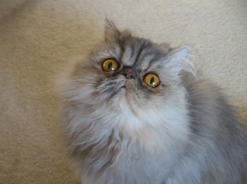 wonder-cat